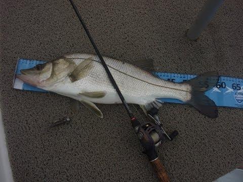 Dica técnicas para pescar robalo com camarão artificial e Jig head (Camarão Flex)